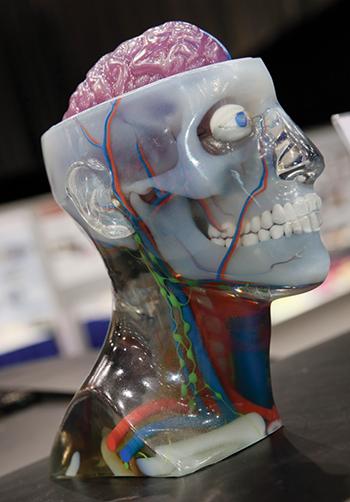 3D head