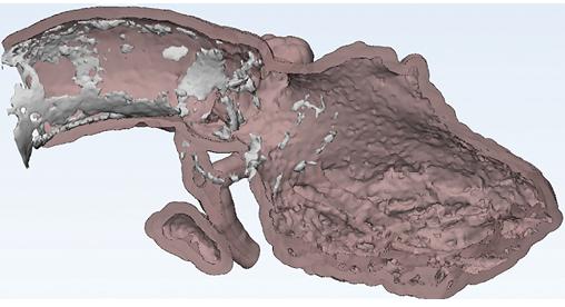 AI 3D Image