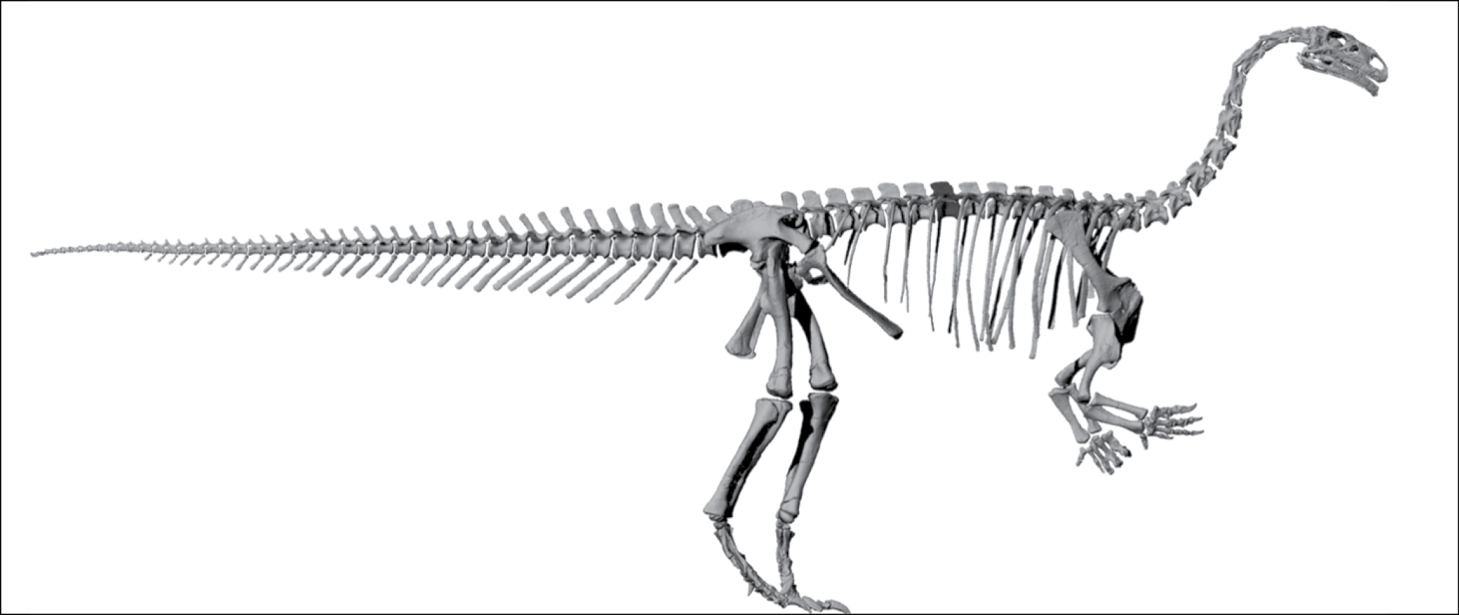 Illustration of Plateosaurus skeleton