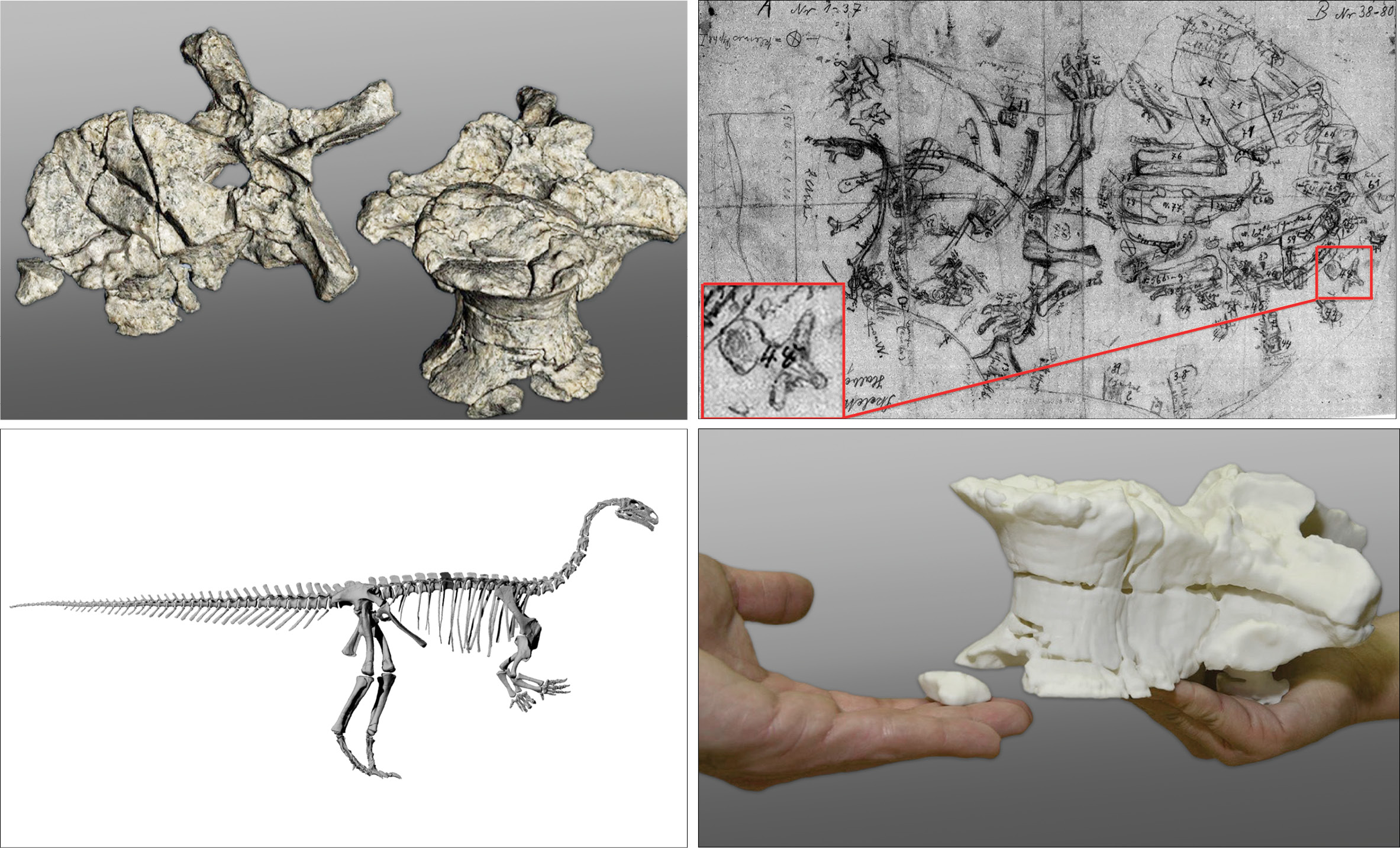 3D Printing Creates Physical Models of Dinosaurs lg