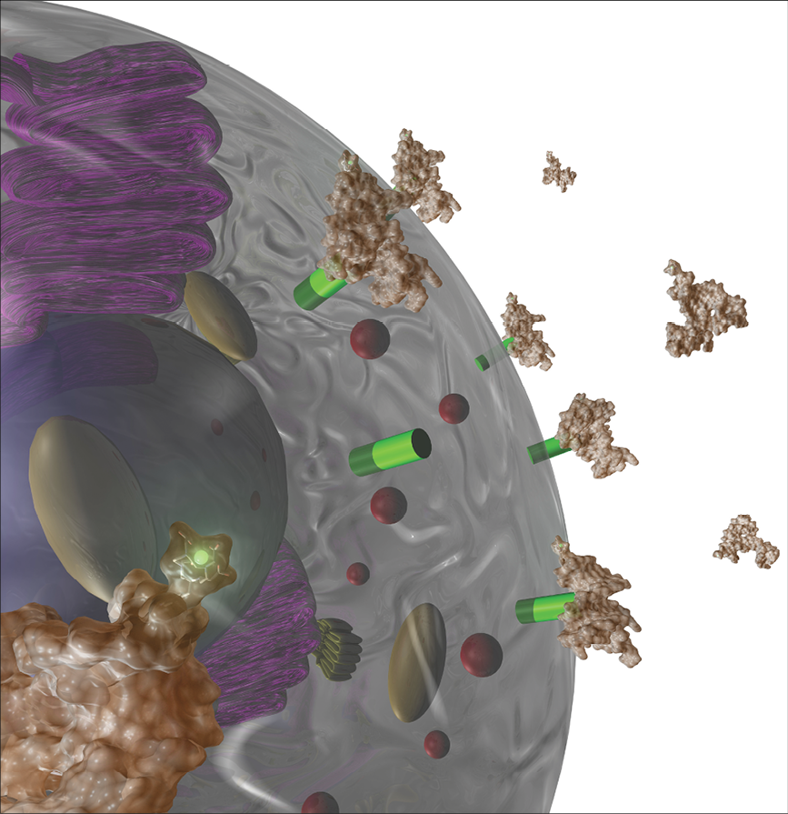 illustration of radiolabeled aptamers binding to prostate-specific membrane antigen (PSMA) (green cylinders) on the surface of a prostate cancer cell